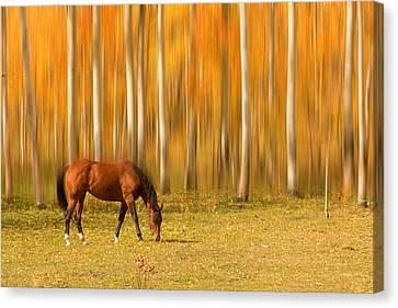 Mystic Autumn Grazing Horse Canvas Print