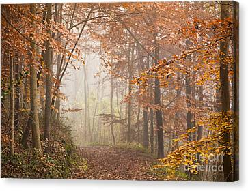 Mystic Woods Canvas Print by Anne Gilbert