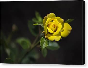 Mystic Yellow Rose Canvas Print by Christina Rollo