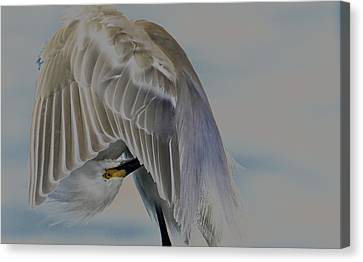 Mystical Egret Canvas Print
