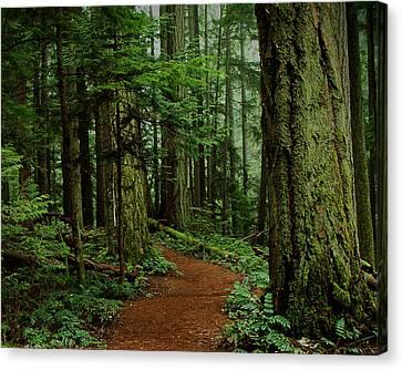 Mystical Path Canvas Print by Randy Hall