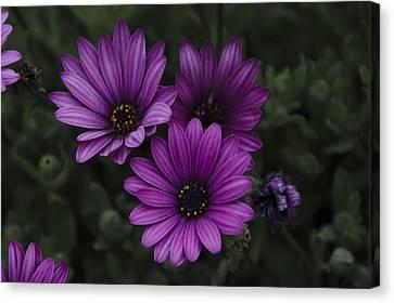 Mystical Purple Canvas Print by Penny Lisowski