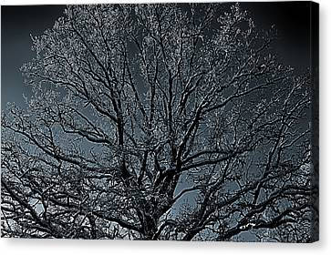 Mystical Tree Canvas Print by Christian Lagereek
