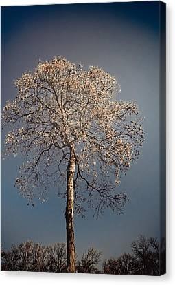 Mystical Tree Canvas Print