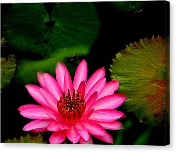 Canvas Print featuring the photograph Mystical Water Lilly by Jodi Terracina