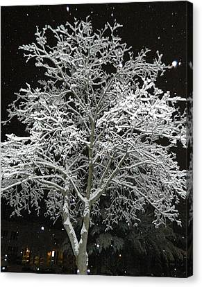 Mystical Winter Beauty Canvas Print by Emmy Marie Vickers