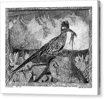 Roadrunner Beep Beep Beep Canvas Print by Jack Pumphrey