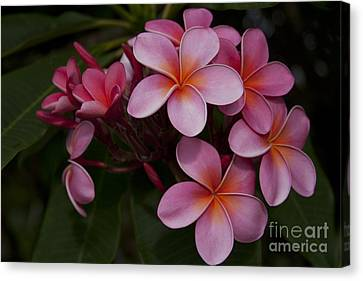 Na Lei Pua Melia O Wailua - Pink Tropical Plumeria Hawaii Canvas Print by Sharon Mau