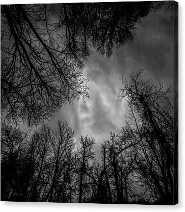 Naked Branches Canvas Print by Bob Orsillo
