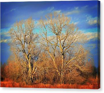 Naked Branches Canvas Print by Marty Koch