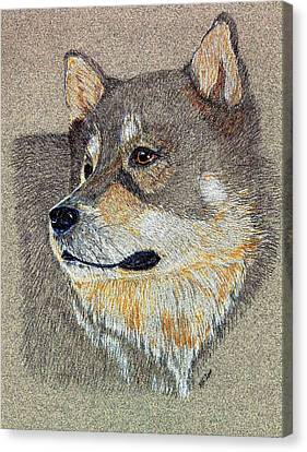 Canvas Print featuring the drawing Nanook by Stephanie Grant
