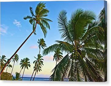 Nanuku Levu, Fiji Islands Palm Trees Canvas Print