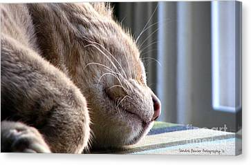 Canvas Print featuring the photograph Nap Time by Sandra Bauser Digital Art