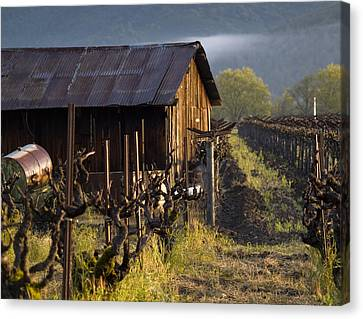 Grape Vines Canvas Print - Napa Morning by Bill Gallagher