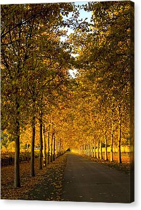 Napa Valley Fall Canvas Print by Bill Gallagher