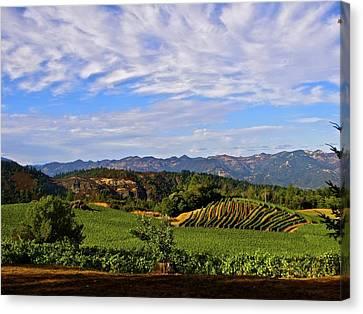 Napa Valley Pride Mountain Vineyard Canvas Print