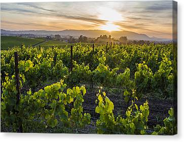 Napa Valley Sunset  Canvas Print by John McGraw