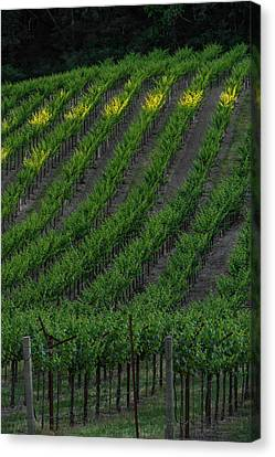 Napa Valley Vineyard Canvas Print by Steve Gadomski