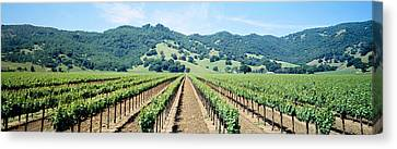 Napa Valley Vineyards Hopland, Ca Canvas Print by Panoramic Images