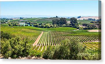 Napa Valley - Wine Vineyards In Napa Valley California. Canvas Print by Jamie Pham
