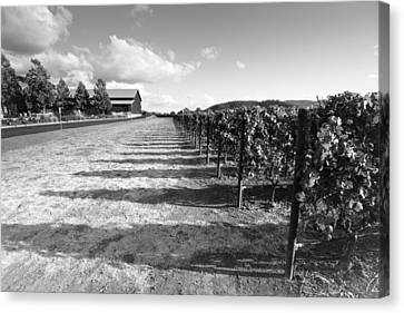 Napa Valley And Vineyards Canvas Print - Napa Vine Rows by Paul Scolieri