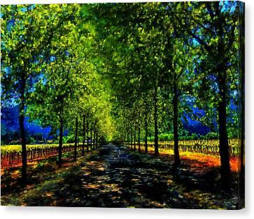 Napa Vineyard 2 Canvas Print by Cary Shapiro