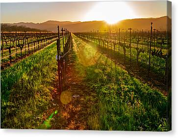 Napa Vineyard Canvas Print by Francesco Emanuele Carucci