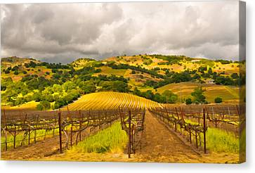 Napa Vineyard Canvas Print by Mick Burkey