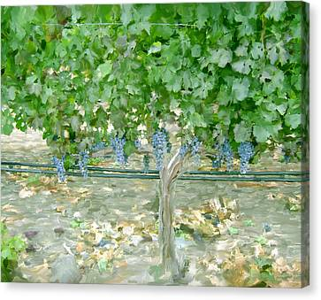 Napa Vineyard Canvas Print by Paul Tagliamonte