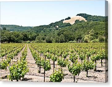 Napa Vineyard With Hills Canvas Print by Shane Kelly