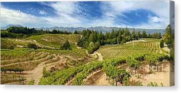 Grape Vine Canvas Print - Spring Mountain Beauty by Jon Neidert