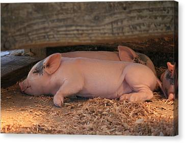 Canvas Print featuring the photograph Naptime by Kathleen Scanlan