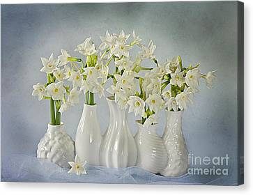 Narcissus 'paperwhites' Canvas Print by Jacky Parker