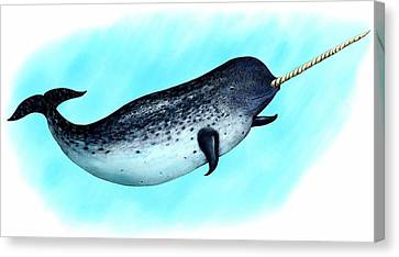 Narwhal Whale Canvas Print by Roger Hall