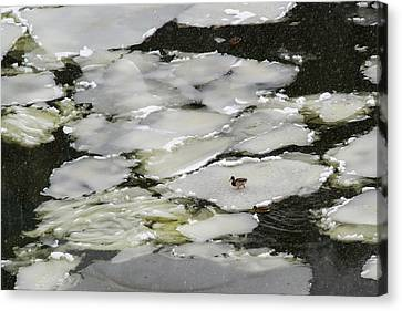 Nasty Weather - Featured 3 Canvas Print by Alexander Senin