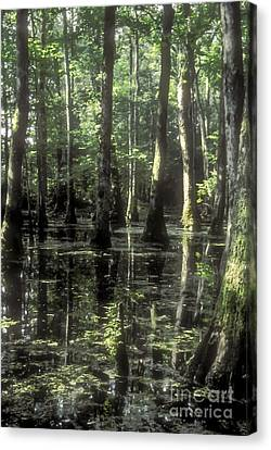 Natchez Trace Cypress Canvas Print by Bob Phillips