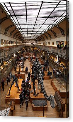 Natural Canvas Print - National Museum Of Natural History - Paris France - 011326 by DC Photographer
