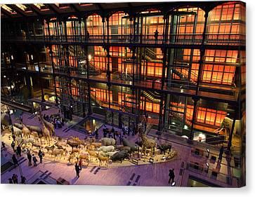 National Museum Of Natural History - Paris France - 011362 Canvas Print