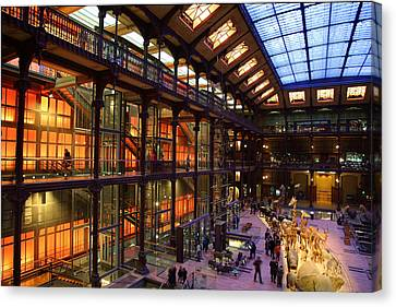 National Museum Of Natural History - Paris France - 011367 Canvas Print by DC Photographer