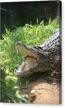 National Zoo - Alligator - 12123 Canvas Print by DC Photographer