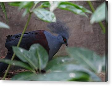 National Zoo - Birds - 011329 Canvas Print by DC Photographer