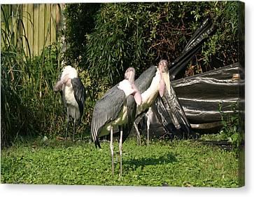 National Zoo - Birds - 121212 Canvas Print