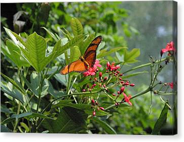 National Zoo - Butterfly - 12126 Canvas Print by DC Photographer
