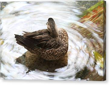 National Zoo - Duck - 01136 Canvas Print by DC Photographer