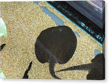 Washington Canvas Print - National Zoo - Fish - 011315 by DC Photographer