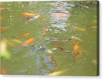 National Zoo - Fish - 011317 Canvas Print by DC Photographer