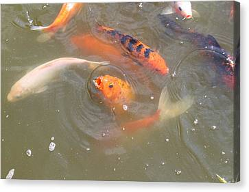 National Zoo - Fish - 01135 Canvas Print by DC Photographer