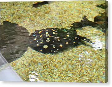 National Zoo - Fish - 01138 Canvas Print by DC Photographer