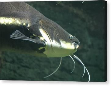 National Zoo - Fish - 12121 Canvas Print