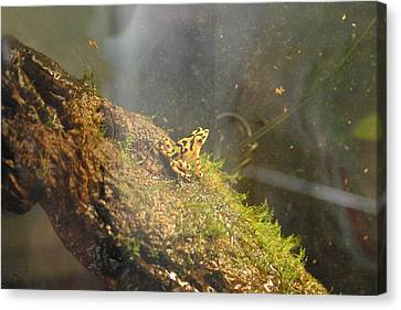 National Zoo - Frog - 12121 Canvas Print